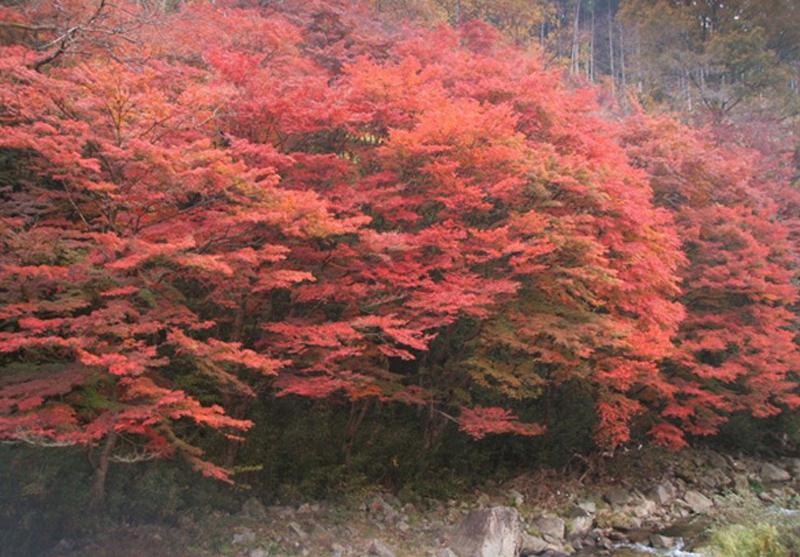 日本大正村のみどころ 下ヶ渕のかえで,日本大正村