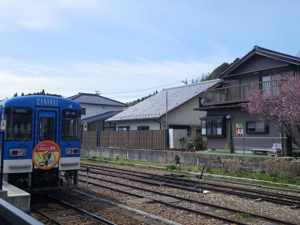 今年初めての明智駅で桜の開花を発見しました!!